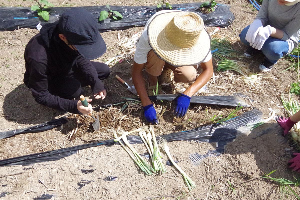 若者支援シェアハウス「人おこし」|農作業