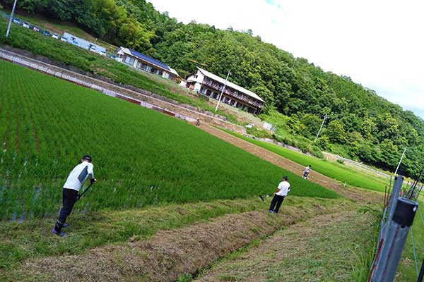 ひきこもり支援|人おこし|田んぼ草刈り